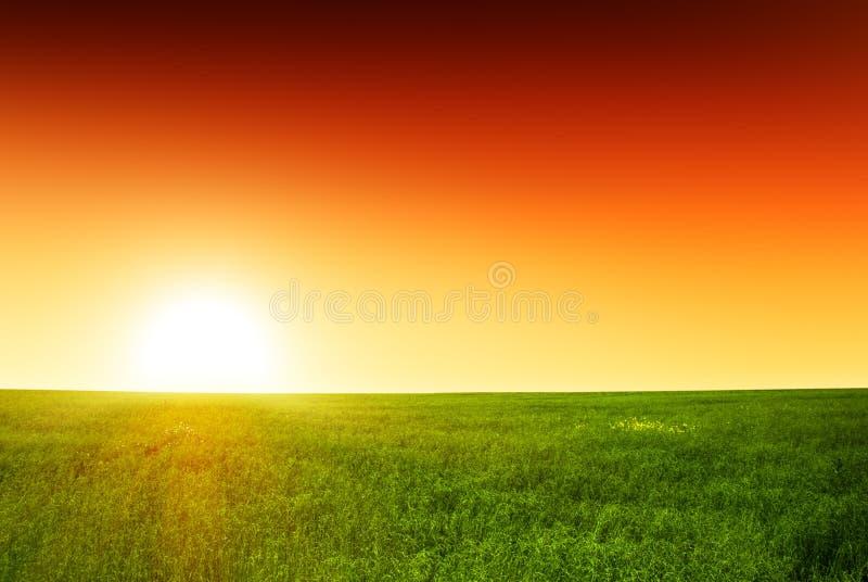 Zone d'herbe et de coucher du soleil photo libre de droits