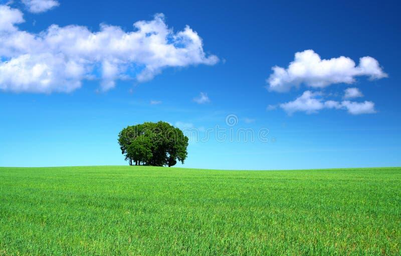 Zone d'herbe et un groupe d'arbres image stock