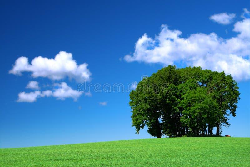 Zone d'herbe verte et un groupe d'arbres images libres de droits
