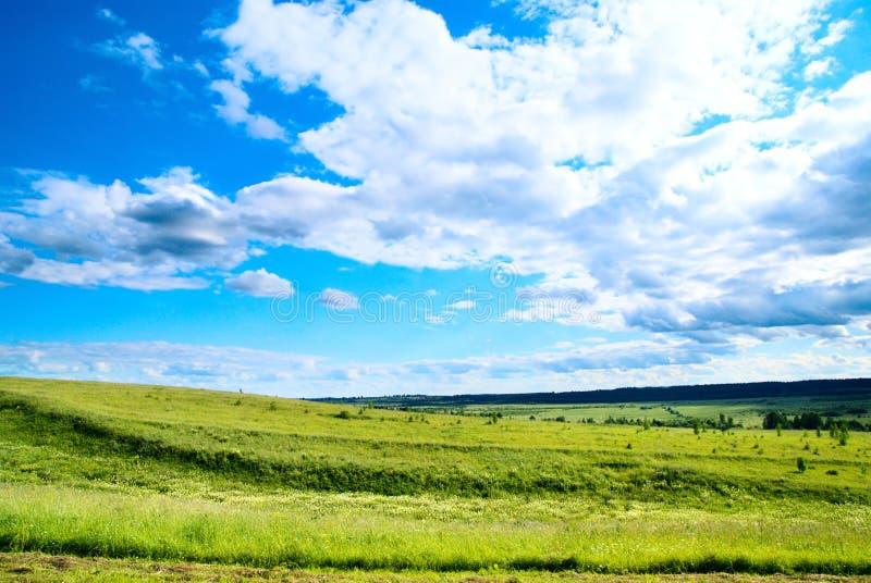 Zone d'horizontal d'été d'herbe image stock