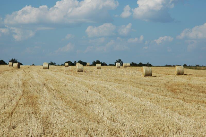 Zone de blé 2 images libres de droits