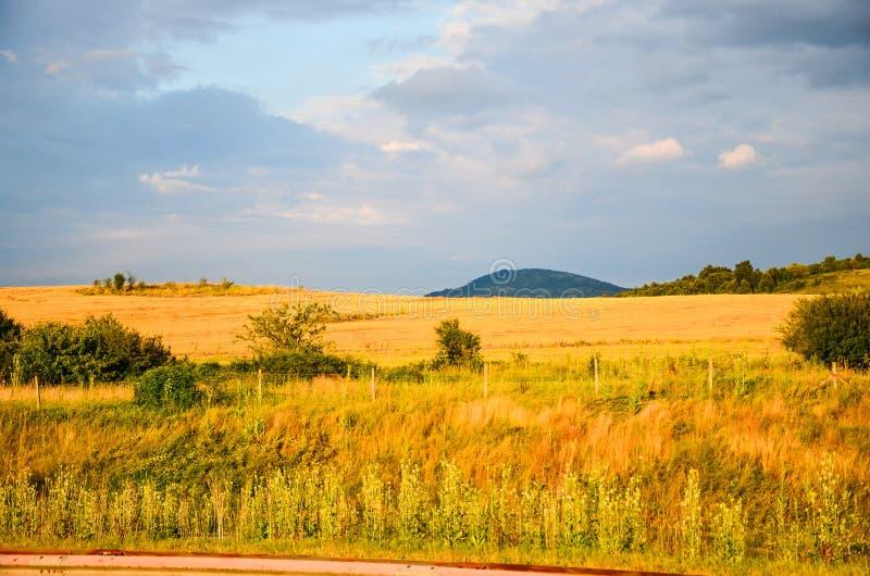 Zone de blé d'or photographie stock libre de droits