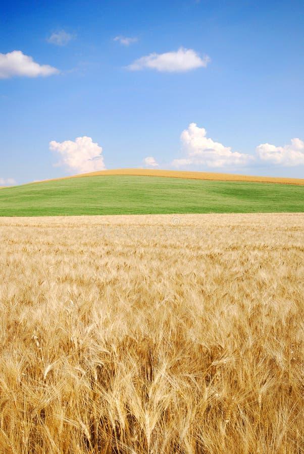 Zone de blé et là-bas image stock