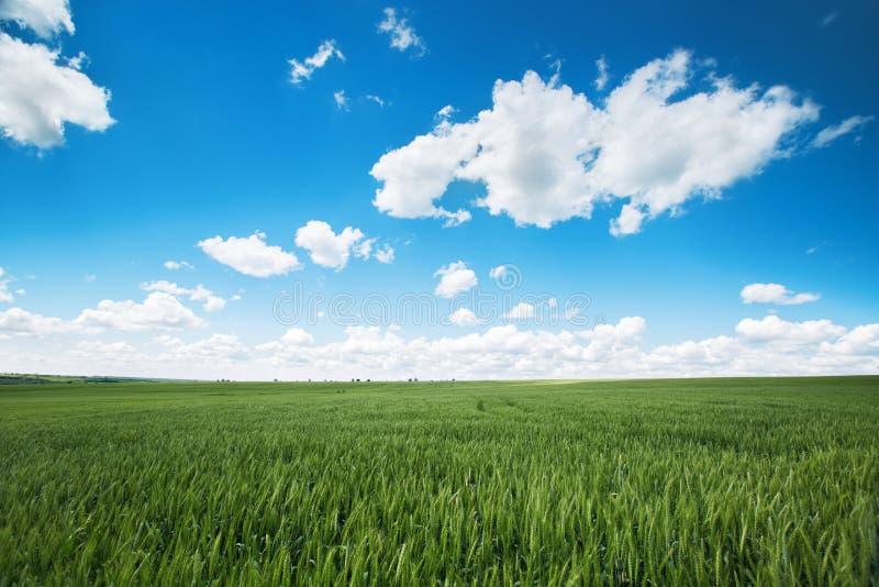 Zone de blé Herbe verte fraîche et beaux nuages photo stock