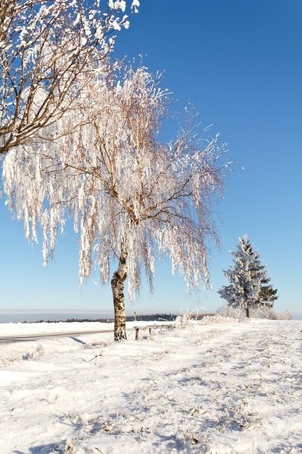 Zone de l'hiver un jour givré ensoleillé photos stock