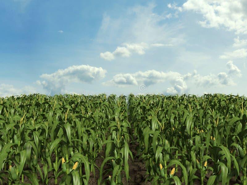 Zone de maïs illustration stock