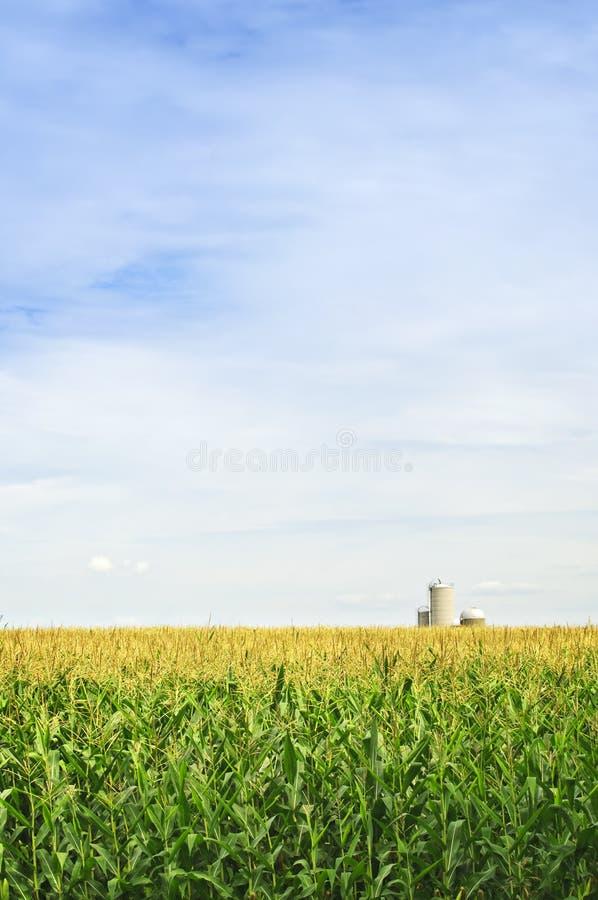 Zone de maïs avec des silos images libres de droits