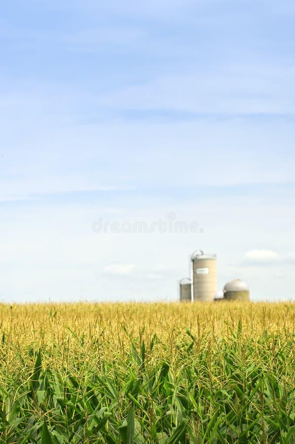 Zone de maïs avec des silos image stock
