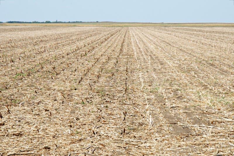 Zone de maïs moissonnée photographie stock