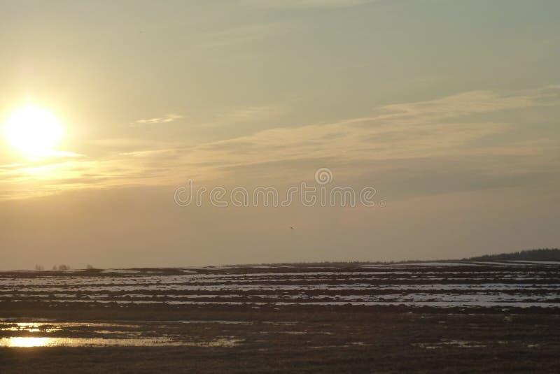 Zone de matin de source? d'herbe verte et de ciel nuageux bleu photo libre de droits