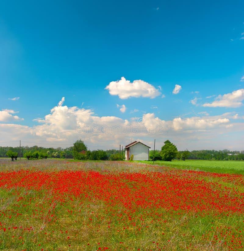 Zone de pavots et ciel bleu nuageux image stock