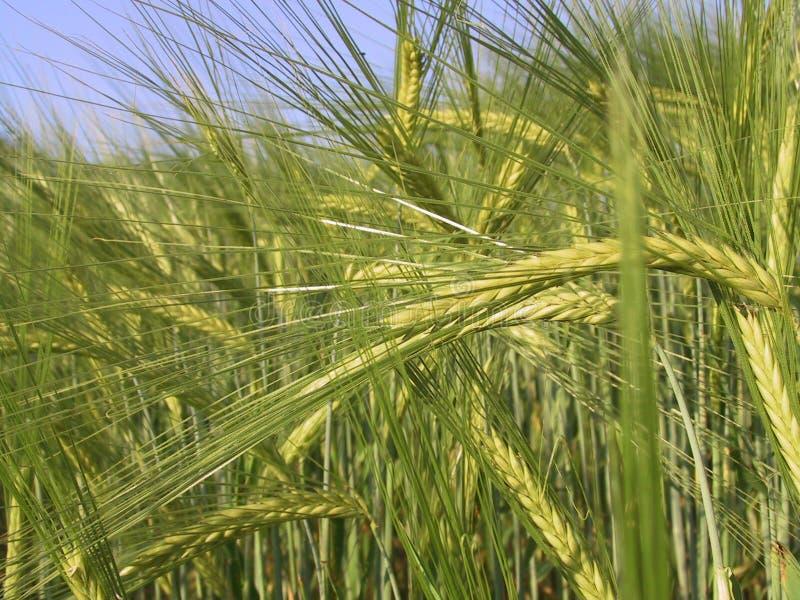 Zone de Rye photo libre de droits