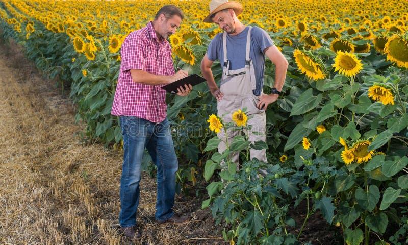 Zone de Sunflowers photographie stock libre de droits