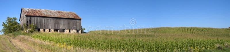 Zone de tige de maïs de panorama de champ de maïs de grange panoramique photos stock