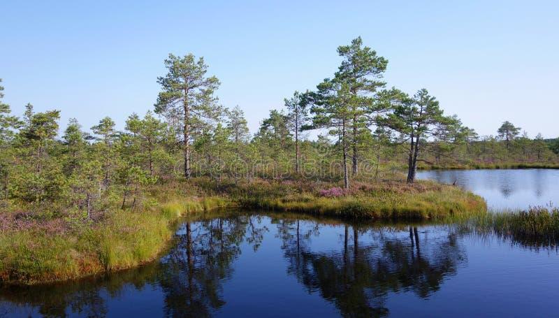 Zone de tourbières sauvages en Estonie en été image stock