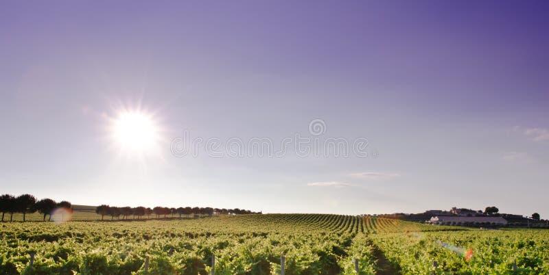 Zone de vigne images stock