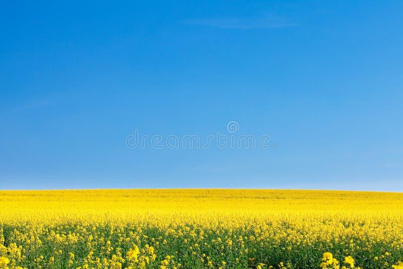 Zone de viol jaune images libres de droits