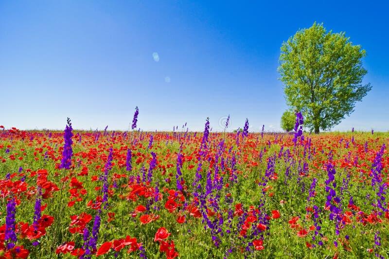 Zone de Wildflowers images libres de droits