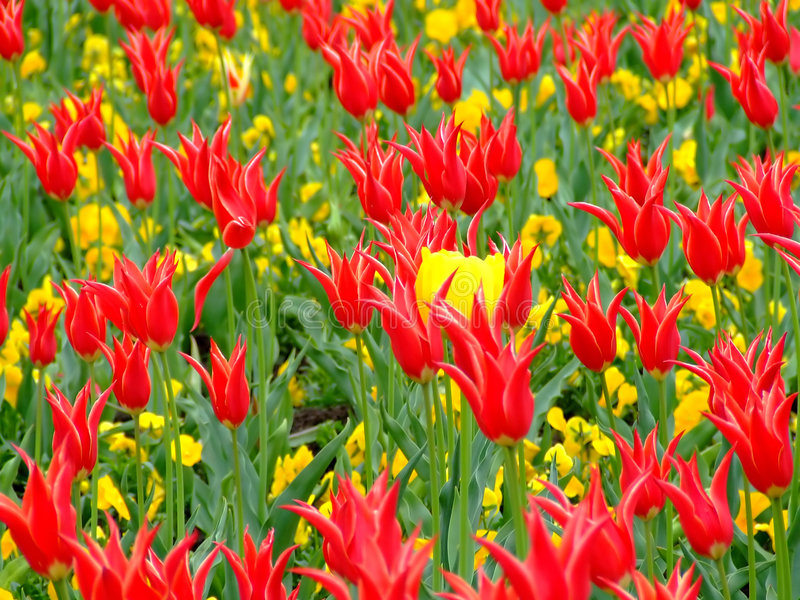Download Zone des fleurs 2 image stock. Image du rouge, lobe, centrale - 735031