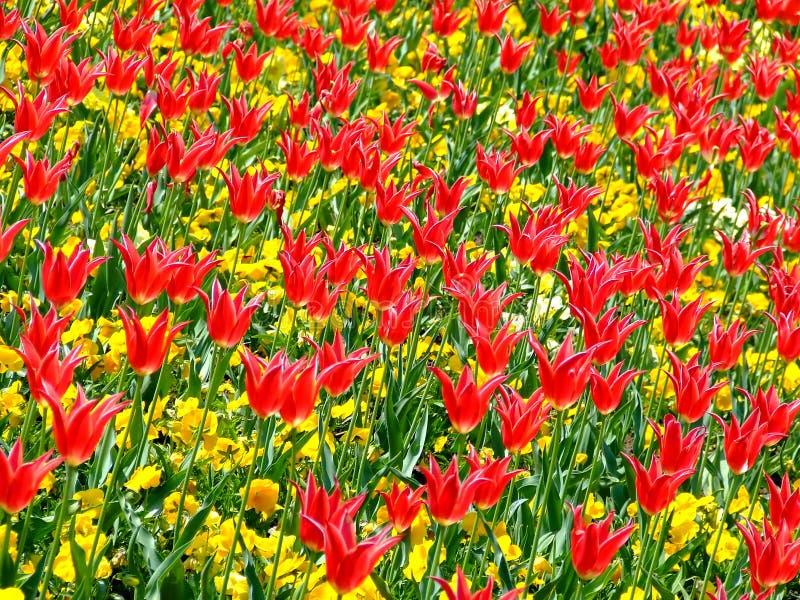 Download Zone des fleurs 3 photo stock. Image du pétale, sort, vert - 744824