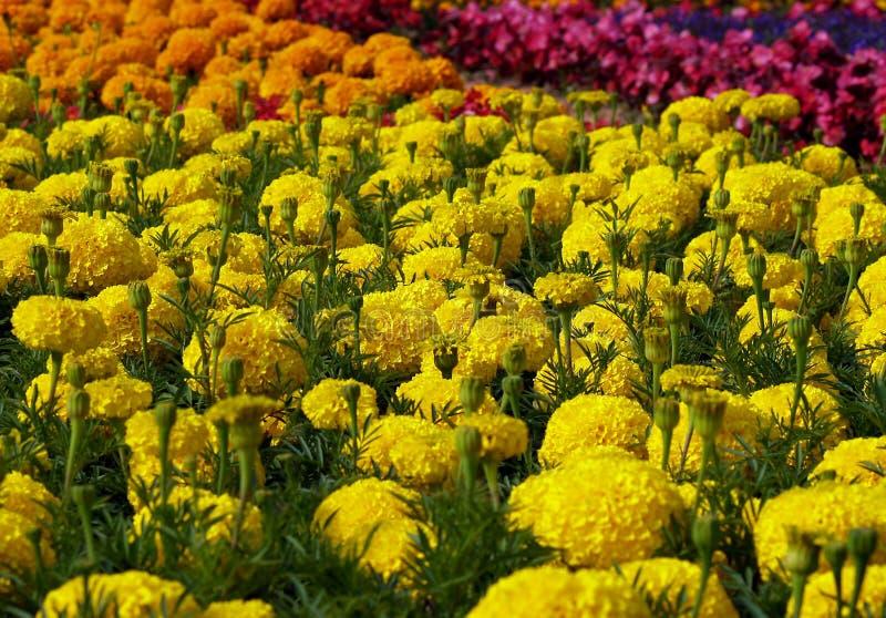 Zone des fleurs photos libres de droits
