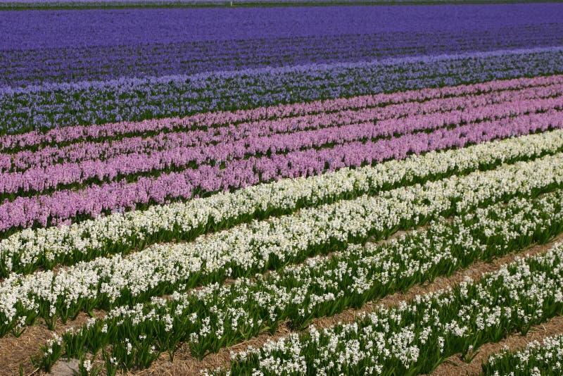 Download Zone des fleurs image stock. Image du salutation, coloré - 738005