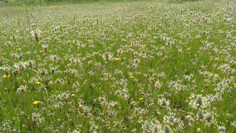 Zone des fleurs au printemps images stock