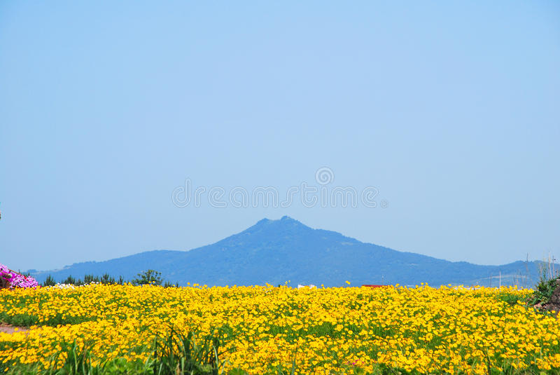 Zone des fleurs avec le volcan image libre de droits