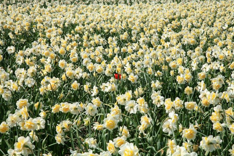Zone des fleurs de source. photographie stock libre de droits