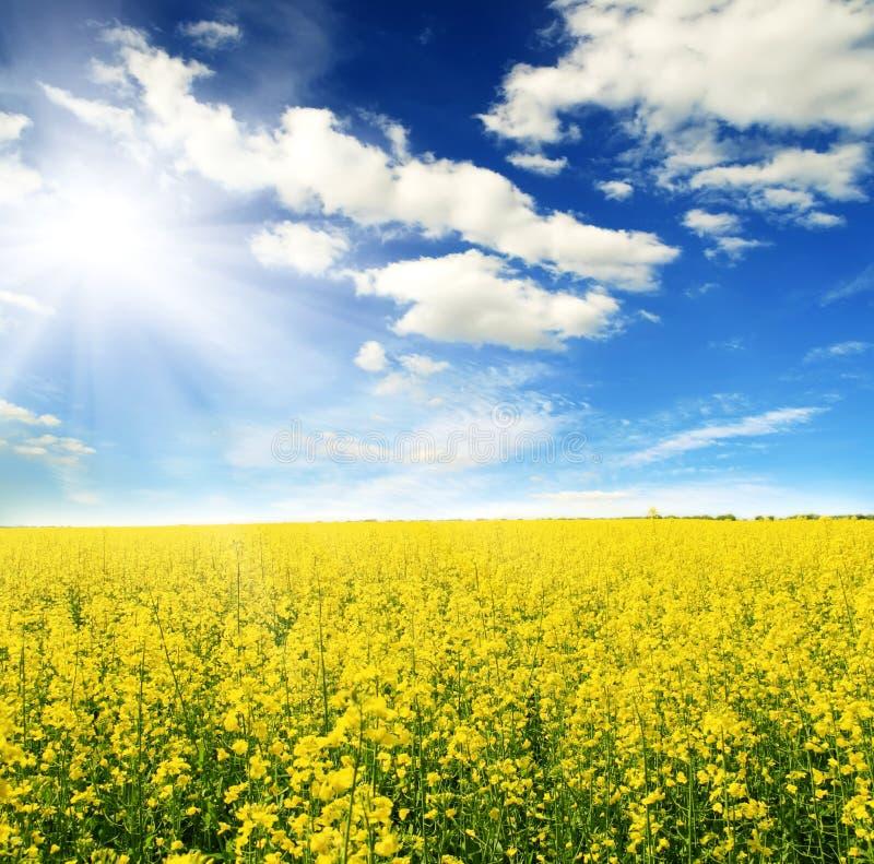 Zone des fleurs et du ciel jaunes du soleil photo stock