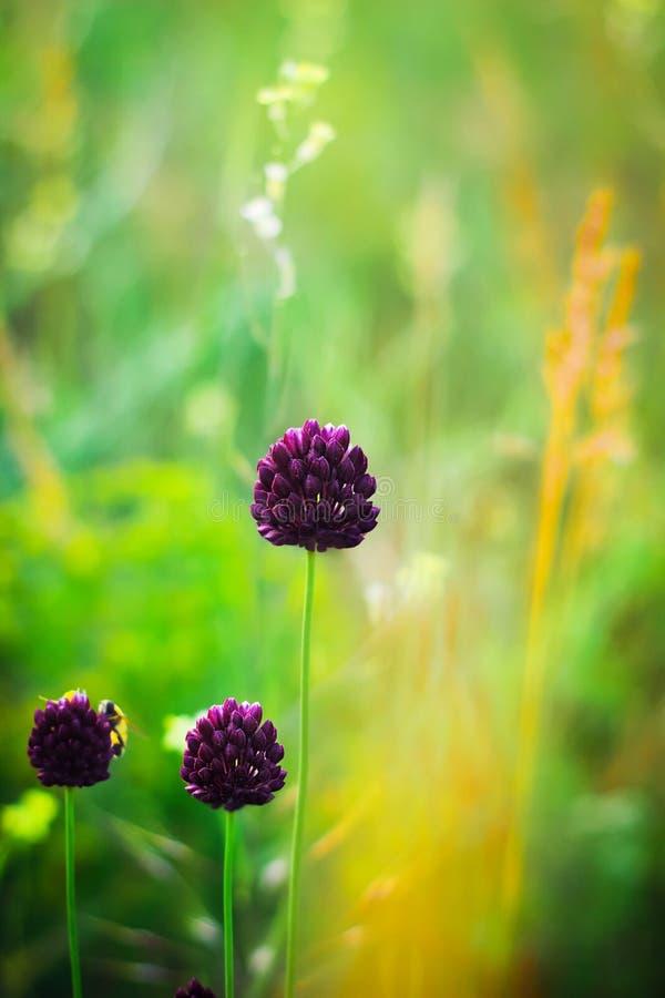 Zone des fleurs pourprées images stock