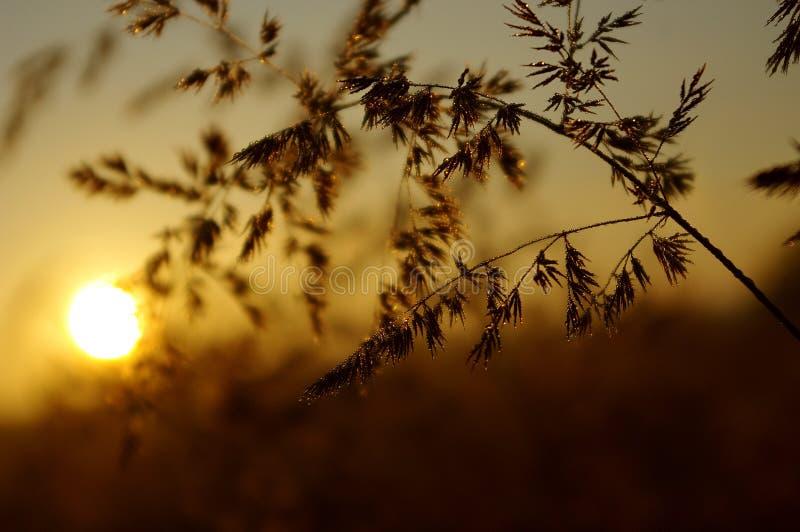 Zone di indicatore luminoso su un'erba fotografia stock libera da diritti