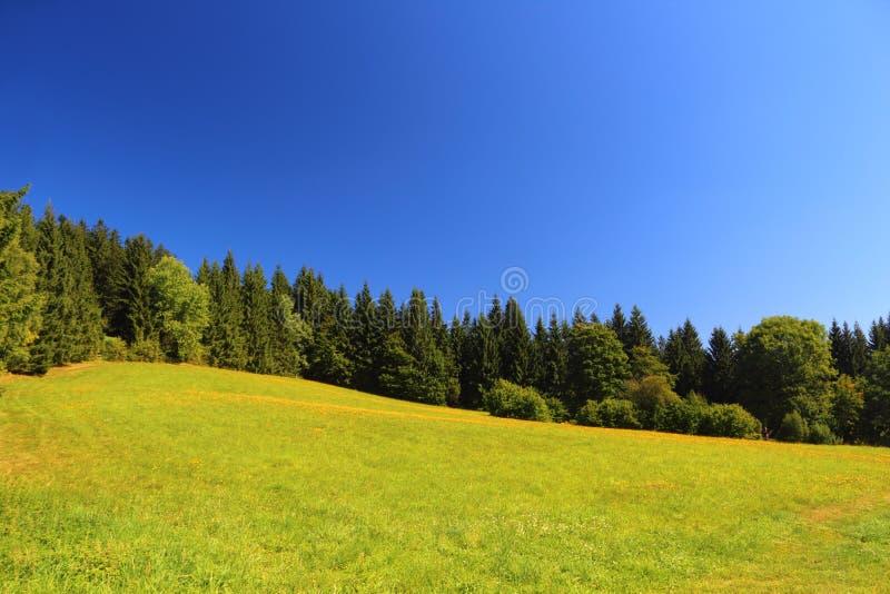Zone et arbres verts image libre de droits