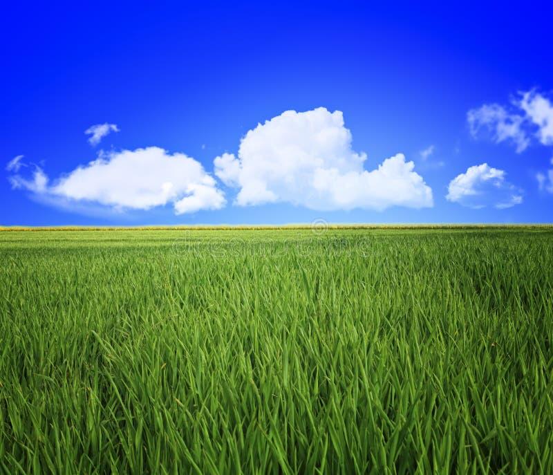 Zone et ciel d'herbe photos libres de droits