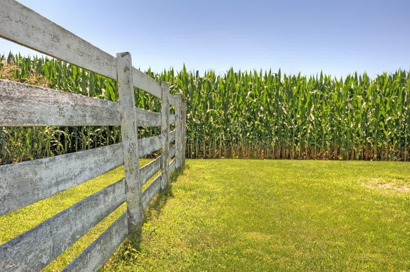 Zone et frontière de sécurité de maïs image libre de droits