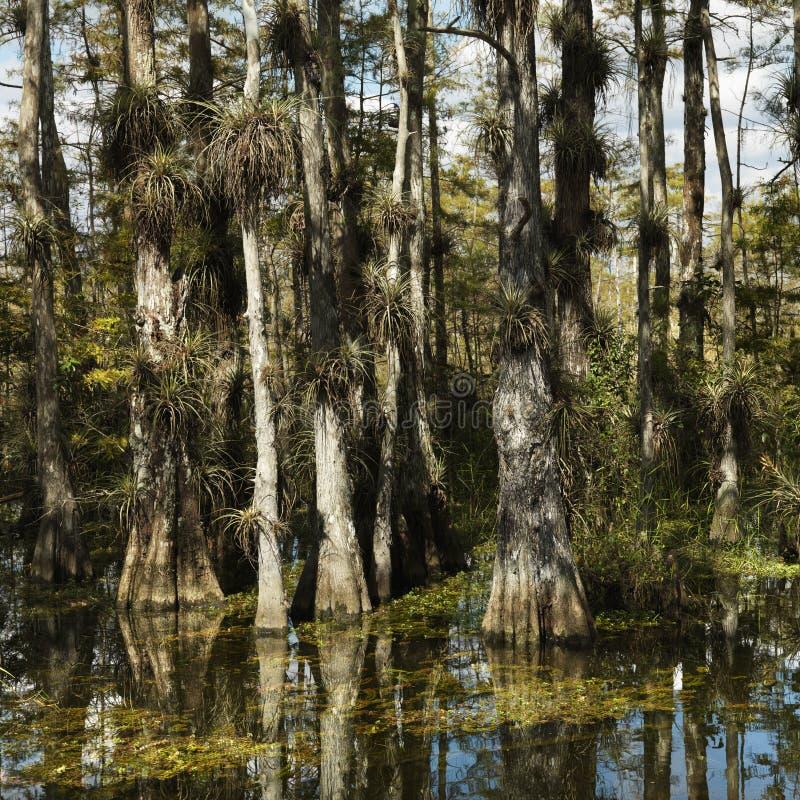 Zone humide dans des marais de la Floride. photographie stock