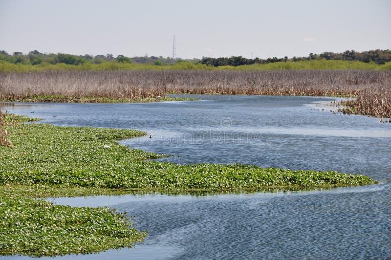 zone humide de la Floride photos stock