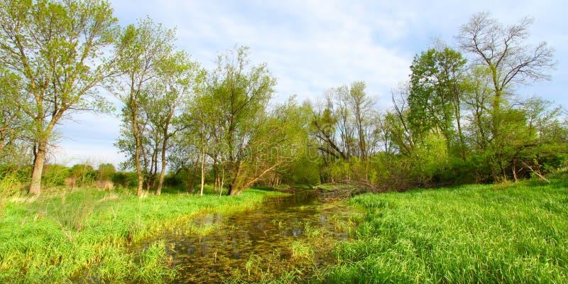 Zone humide noyée - l'Illinois photos libres de droits