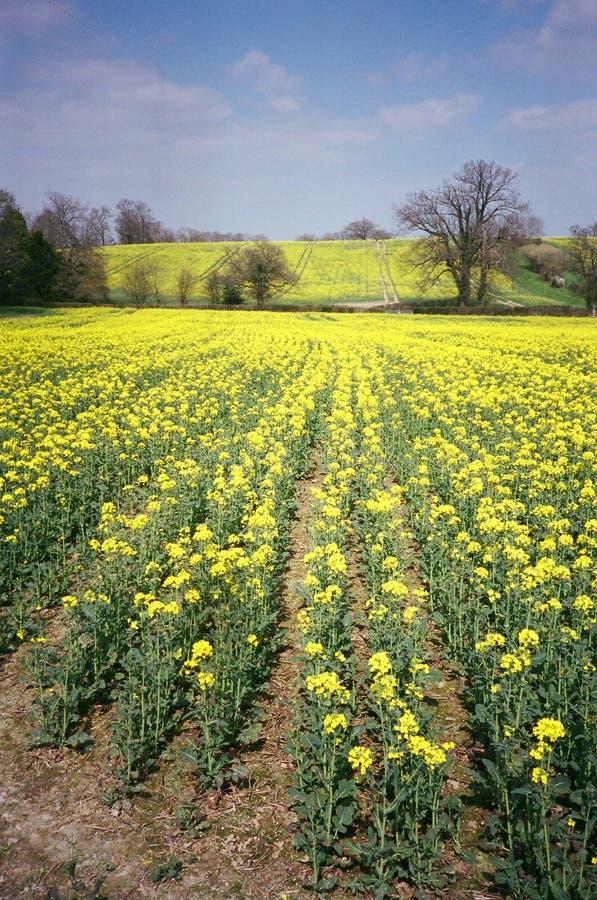 Zone jaune image libre de droits