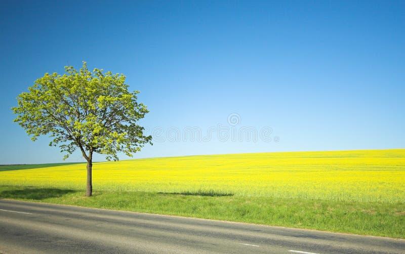 Zone jaune et arbre isolé image stock
