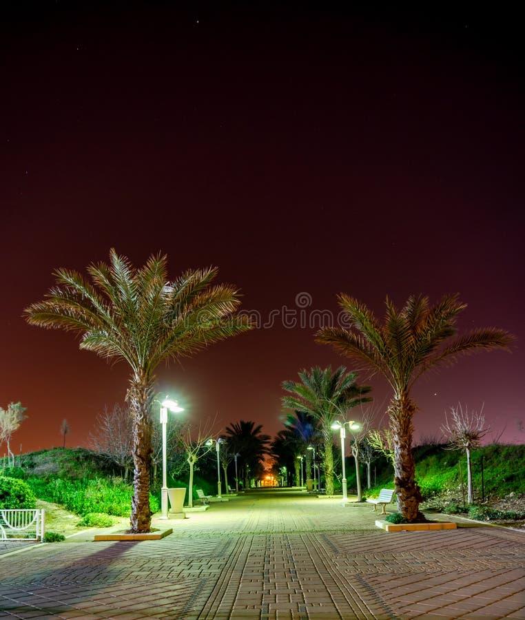Zone piétonnière avec des palmiers la nuit dans la ville de Nahariya, Israël photo libre de droits