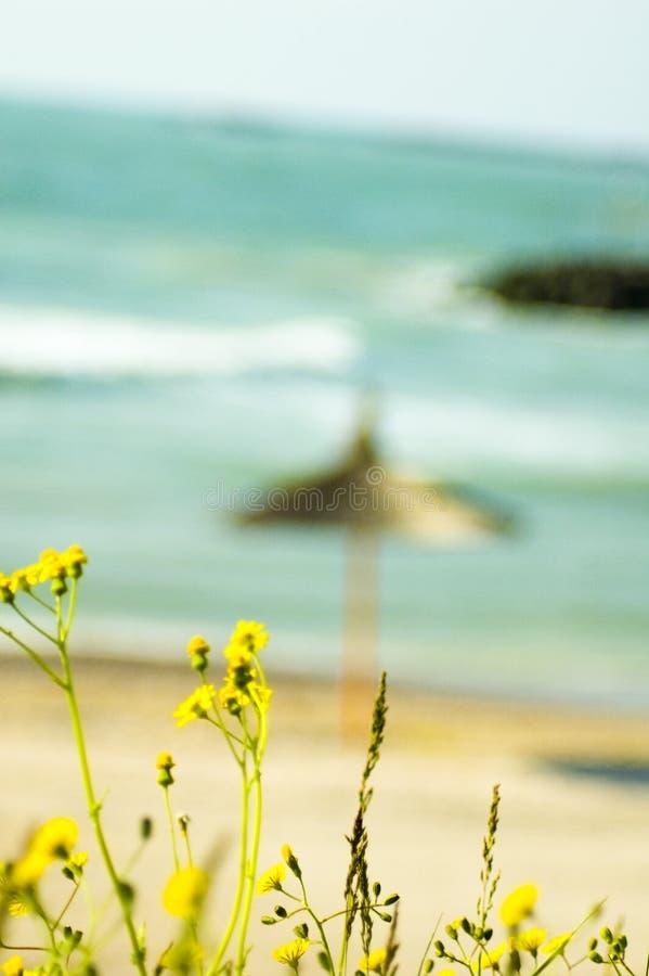 Download Zone Près De La Mer Noire 2 Image stock - Image du zone, plage: 732105