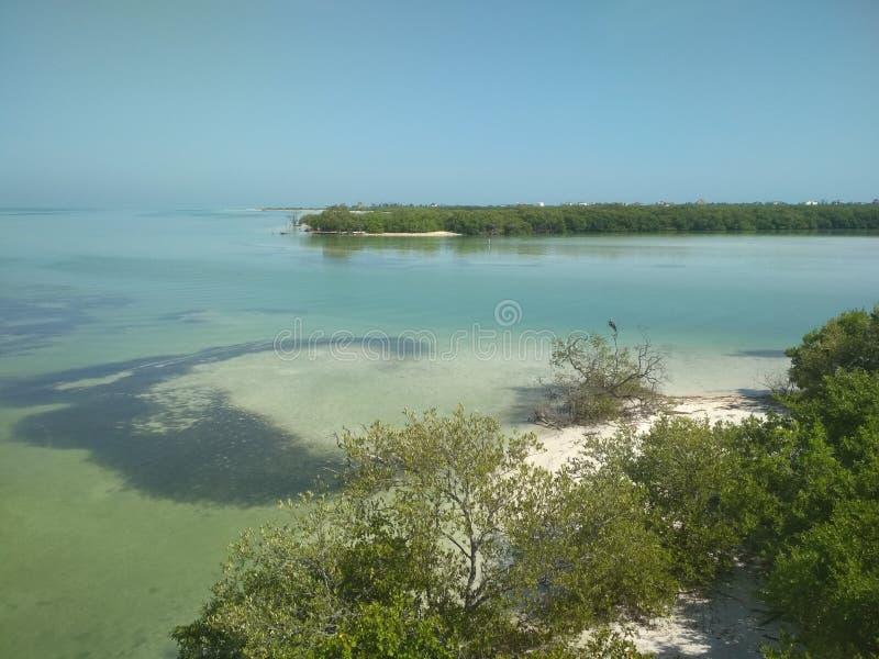 Zone protégée d'Isla Pasion - de Yum Balam photographie stock libre de droits