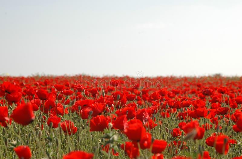 Download Zone rouge image stock. Image du été, sunlight, gentil - 743813