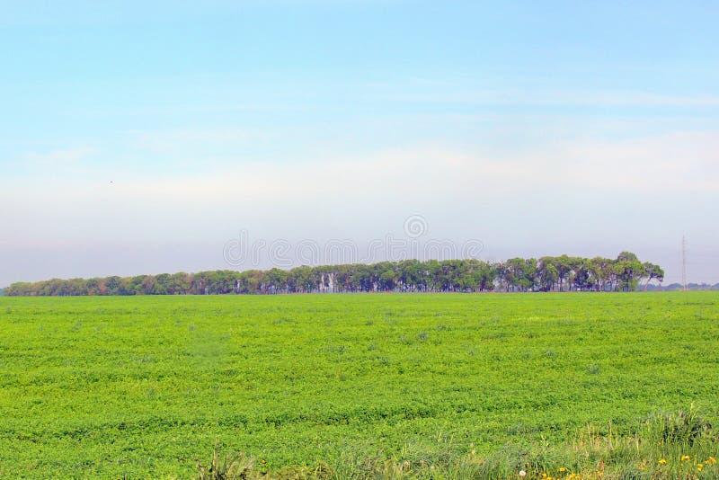 Zone rurali Campo Strada Alberi fotografia stock