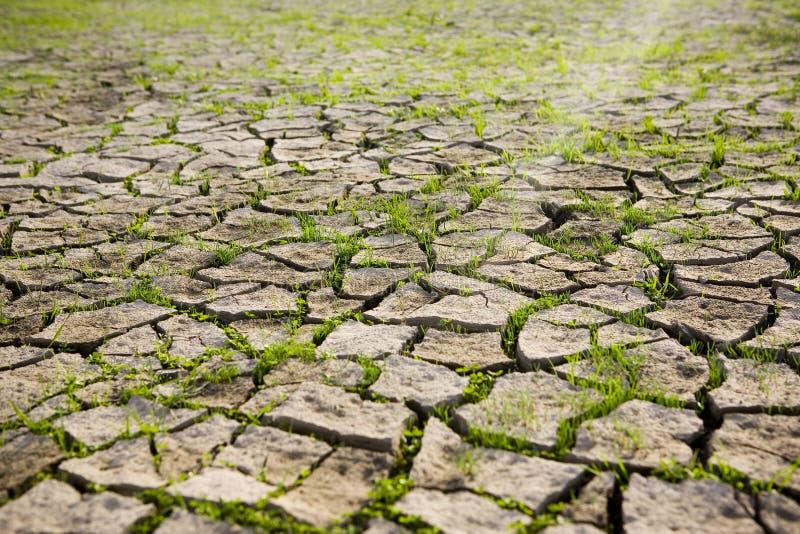 Zone sèche de boue photo stock