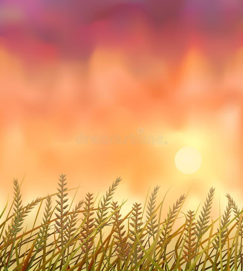 Zone sauvage de collectes au coucher du soleil illustration de vecteur