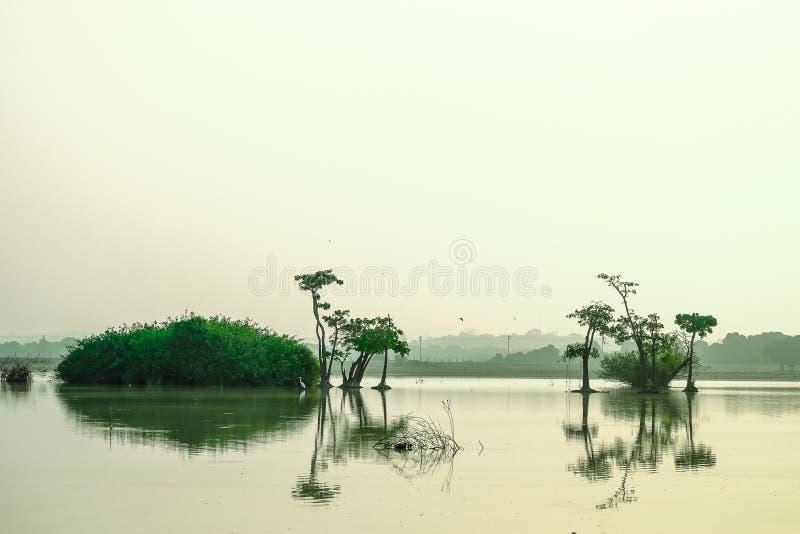 Zone umide che danno la vita a molta gente intorno all'area della palude immagini stock