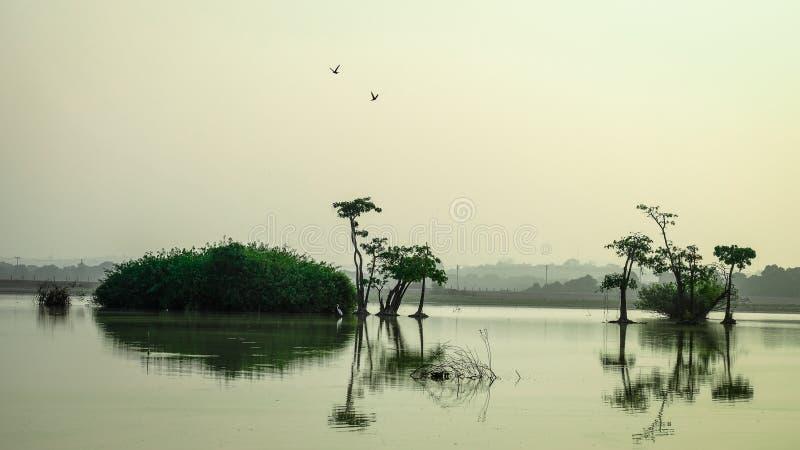Zone umide che danno la vita a molta gente intorno all'area della palude fotografia stock