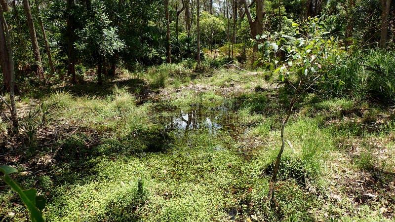 Zone umide come visto da un piccolo ponte di legno fotografie stock